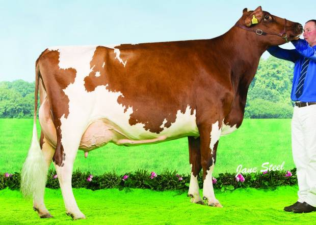 New Future Sire available in Sexed Ultra 4m