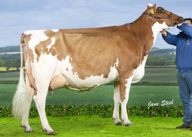 Beechmount Marie Girl - sired by Haresfoot Panache