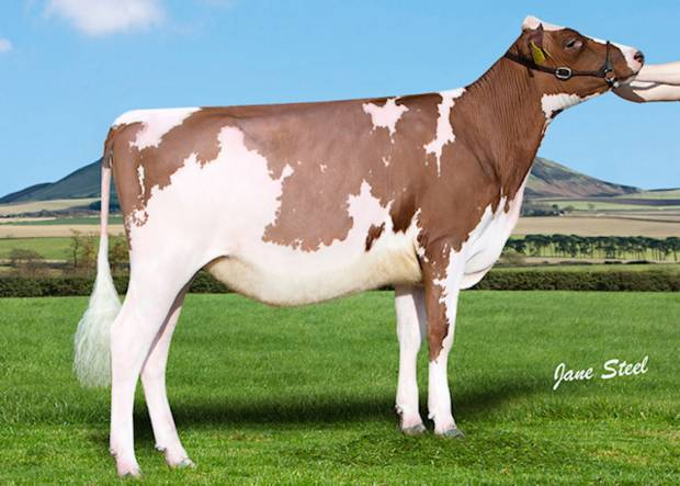 Cuthill Towers Buster Rae - Sired by Cuthill Towers Buster