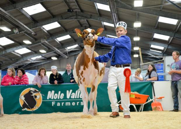 All Breeds All Britain Calf Show 2018 Shedule and Entry form. Entries close Friday 28th September