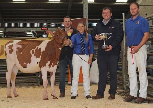 Champion Calf