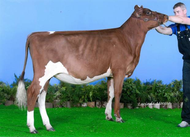 Daughter of Troutbeck Skyfall - Bigginvale Judy 19