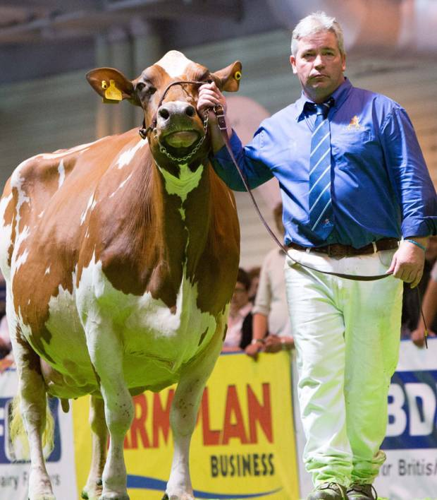 National Ayrshire Show 2016 Judge Announced