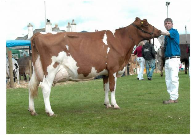 Stevenson's Milking Dispersal Sale Report