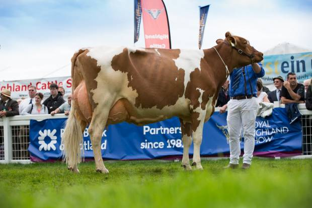 British Red and White Champion and Interbreed Dairy Champion - Cuthill Towers Classic Ellie EX 91 - A & S Lawrie