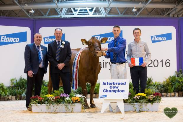 Shaun Rennie leading Horseclose Joanna along with owner Daniel McGarva, Society President - Gilmour Lawrie and Interbreed judge Ashley Fleming