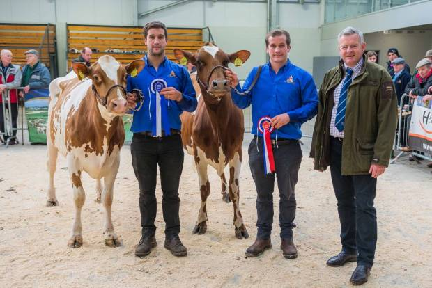 Quality Ayrshires Sold At National Ayrshire Sale