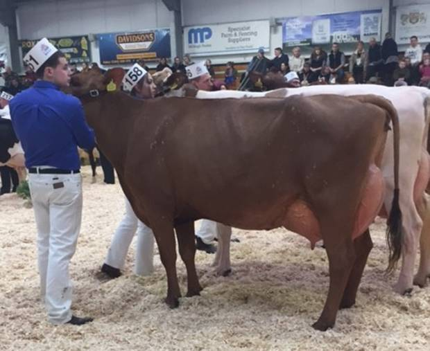 Cattle Services Daughters Dominate This Year's UK Dairy Expo