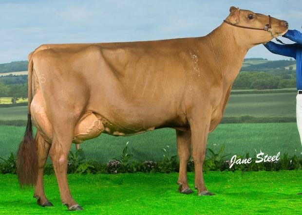 Changue Martha 49 EX95 2E - An example of a cow sold in the last Changue reduction sale purchased by M & C Bryson