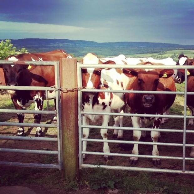 Herdsperson required in Bruton Somerset