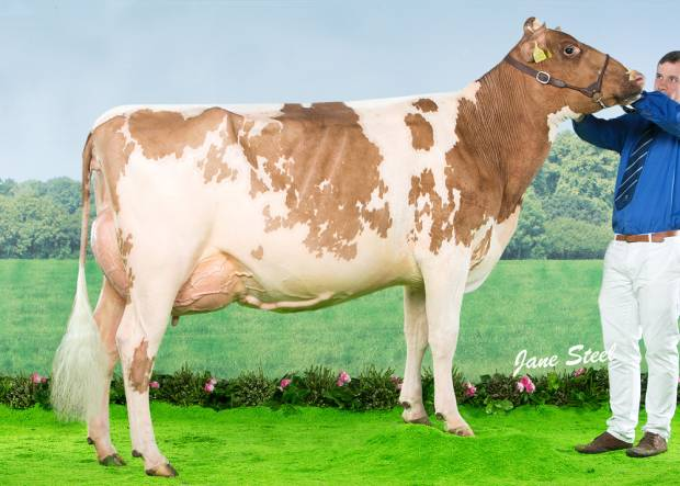 Cuthill Towers Fidelity Miranda VG 88