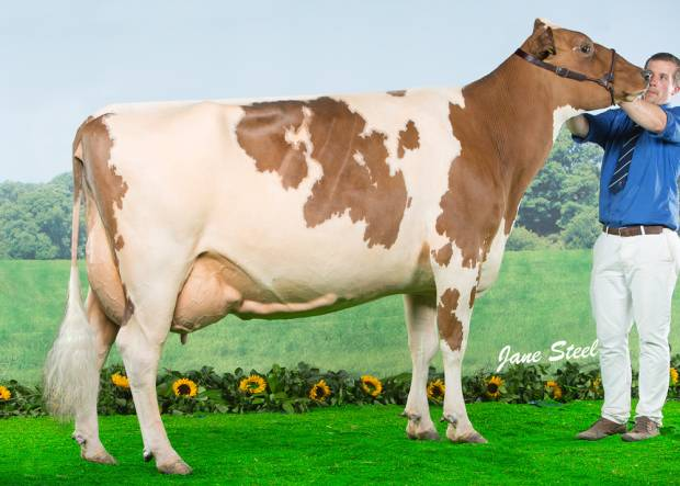 Cuthill Towers Radar Ray 13 EX 93