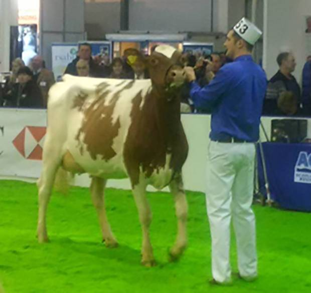 Super Heifer Success for Bruchag Talent Evelyn