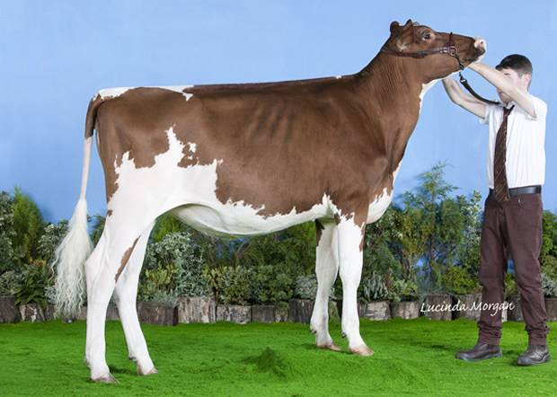 All Breeds Calf Show Results 2014