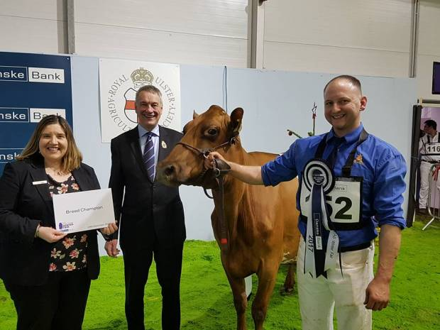 Breed Champion and Reserve for Ardmore at the 2017 Ulster Winter Fair.