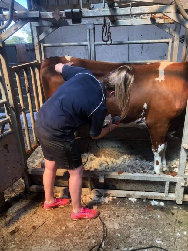 Amy finishing the head clipping on Plaskett Miss Norma 32