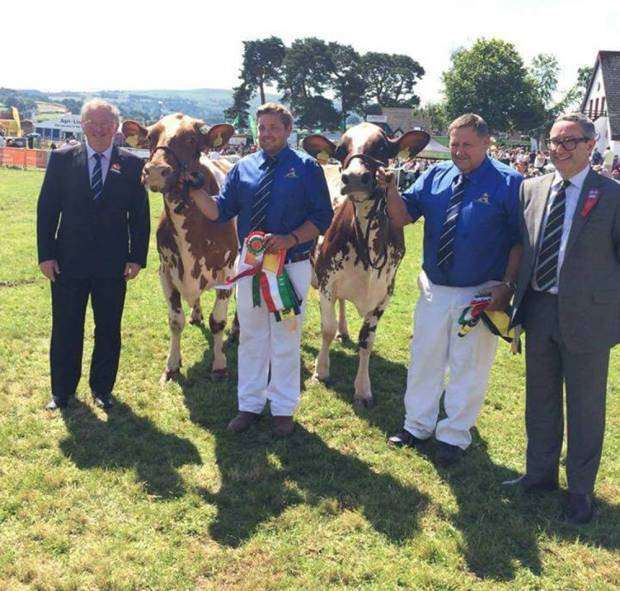 Willhome Ayrshires Are Awarded The Interbreed Pairs Championship At This Year's Royal Welsh Show