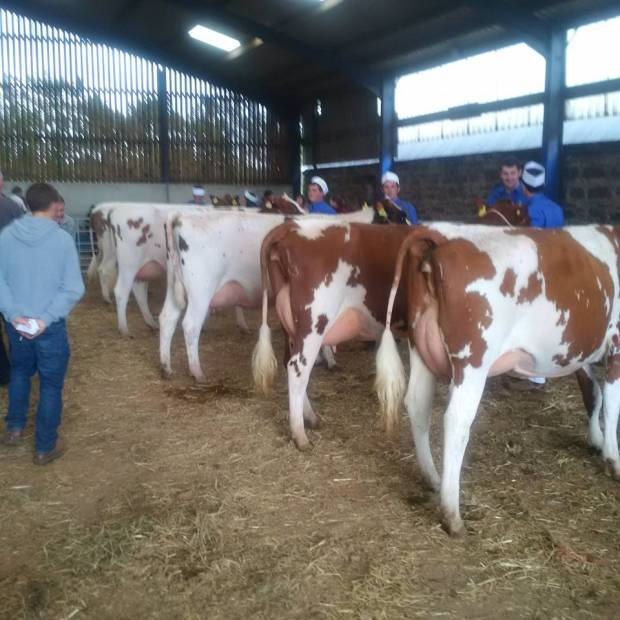 Attendance required for Judging seminar on Tuesday 26th September