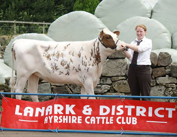 Lanark & District Calf Show Results 2014