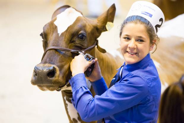 Last Call For Stall Bookings At This Year's National Ayrshire Show