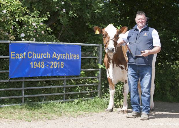 East Church sale of 53 Organic Pedigree Ayrshire Youngstock