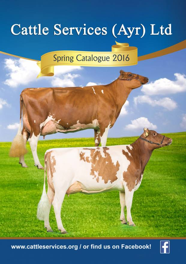 Cattle Services (Ayr) Latest Catalogue