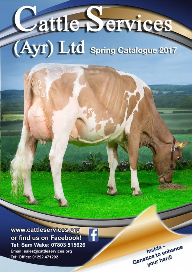 Spring Brochure Available Now