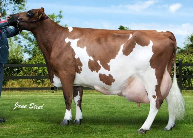 Ravenhill Tulip 26 EX 94 8E Has Produced Over 120,000 Kgs