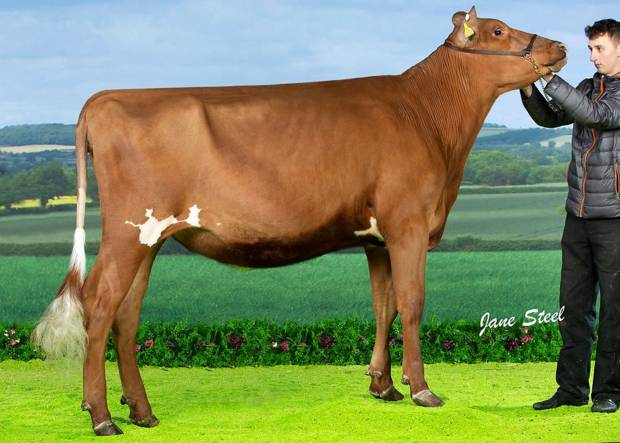 Sandyford Famed Clover - Sired by Hunnington Famous