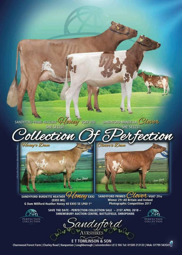 Perfection Collection Sale Saturday 21st April 2018