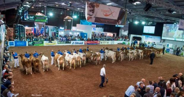 Ayrshire class at the 2017 show