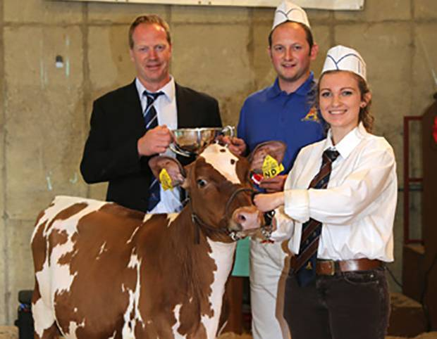 Ardmore Herd Wins Ayrshire Championship At The Ulster Multi-Breed Calf Show