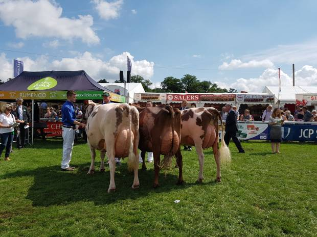 The Championship Lineup and the winning group of three cows