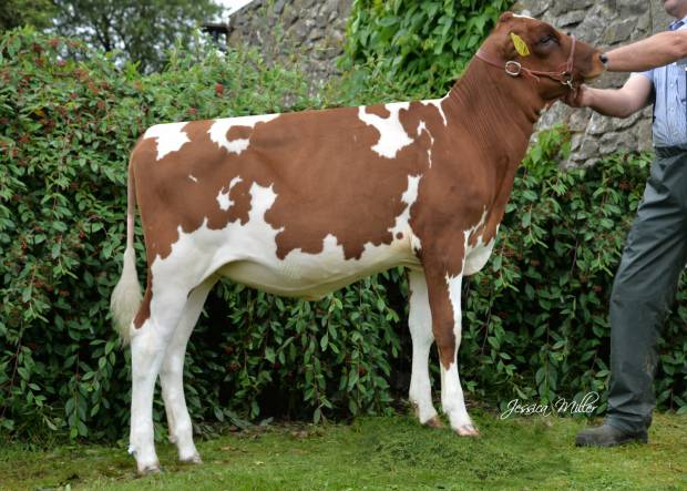 Whitecroft Panell Bella 60 - sired by Whitecroft Panell