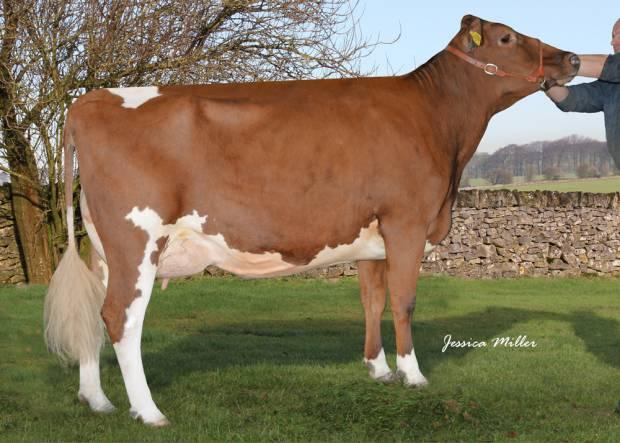 Dau. of Rosehill Real McCoy - Whitecroft Nellie 54