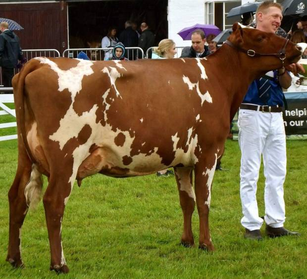 Great Yorkshire Show 2017 Results