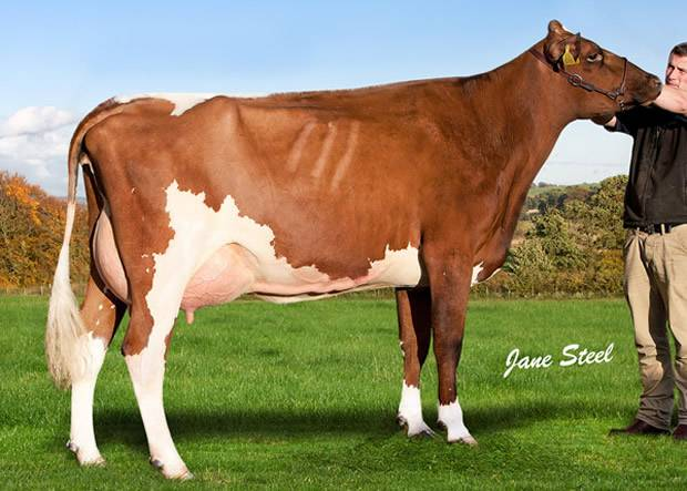 Cuthill Towers Regal Ray 11th VG 88