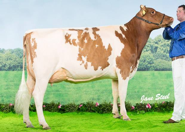 Ayrshires Win Super Heifer At This Year's Agriscot