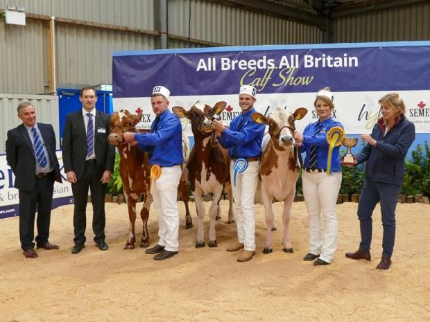 All Britain All Breeds Calf Show