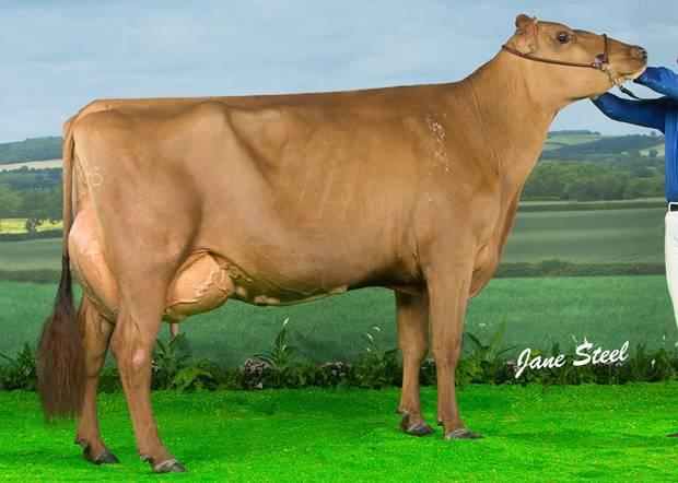 Changue Martha 49 Tops UK Dairy Expo