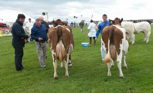 Cow in-Calf Class