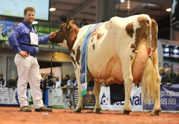 2018 National Ayrshire Show Results