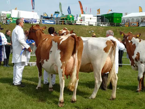 West Berriow Modem Rosehip Tops Royal Cornwall Show