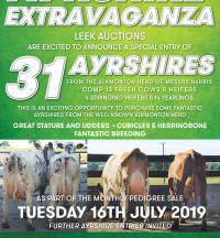 Sale of Ayrshires from Alkmonton Herd