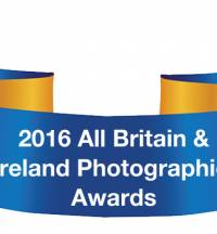 Winners Of The Intermediate Cow in-Milk Section Of The 2016 Photographic Awards Are Announced