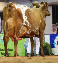 Ayrshire National Show Results 2021